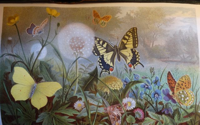Brehms Thierleben deel ongewervelden plaat vlinders